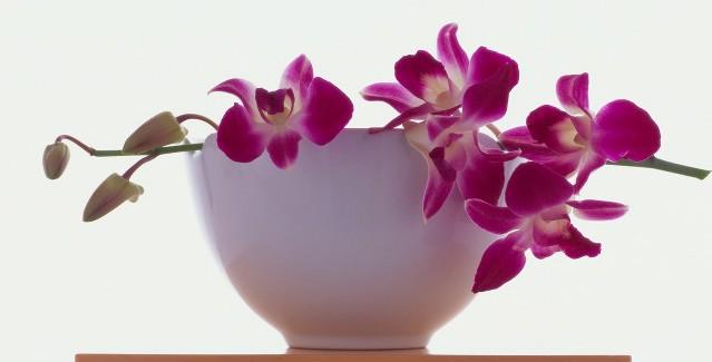 Cvijeće u uredu za nove ideje - Women in Adria
