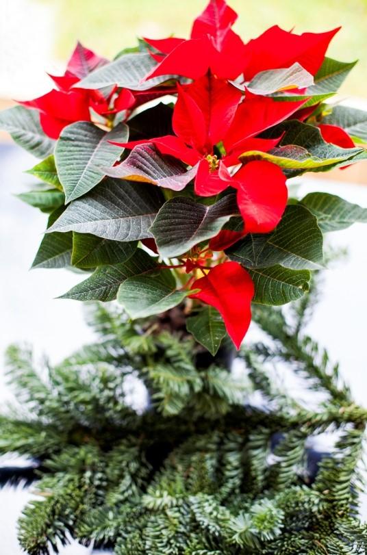 Božić_natura