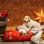 Neodoljiva Qushin božićna kolekcija oduševit će vas i vašeg psa
