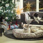 Predivna božićna kolekcija Qushina za potpuni blagdanski ugođaj