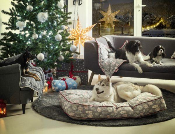 Božićna kolekcija Qushina