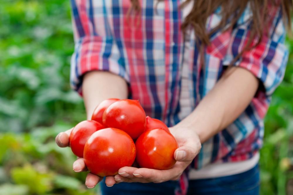 prilike u poljoprivredi