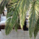 Novi koncepti uređenja interijera i eksterijera uz Havana Bar Design