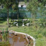 Dođite u nedjelju u zagrebački Zoo gdje vas očekuje jedinstveno predstavljanje volijere za afričke ptice