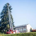 Evo gdje se nalazi najveće božićno drvce u Hrvatskoj