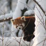 10 razloga zašto zimi posjetiti Zoološki vrt grada Zagreba