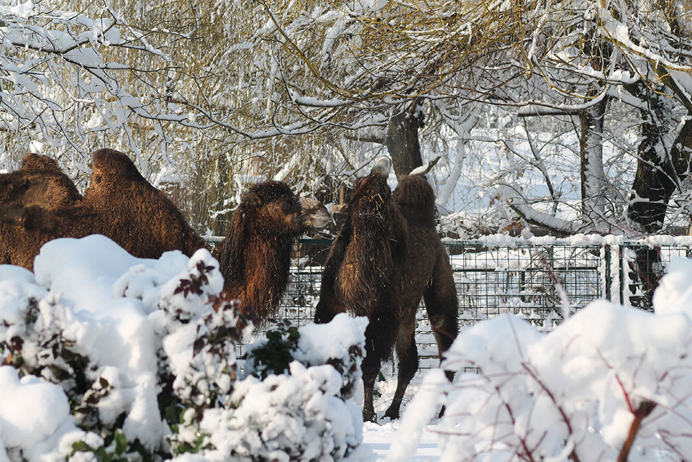 zimi posjetiti zoološki vrt grada Zagreba