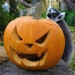 Jesenska Bundevijada u zagrebačkom Zoološkom vrtu odlična je prilika za obiteljski izlet