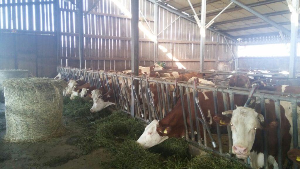 poljoprivredne kulture
