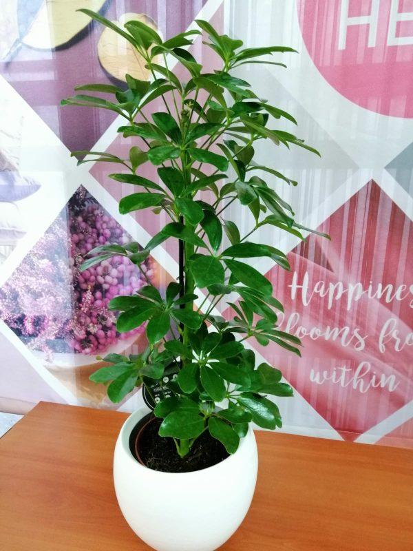 uredske biljke