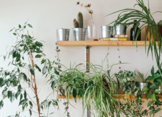 biljke za imunitet