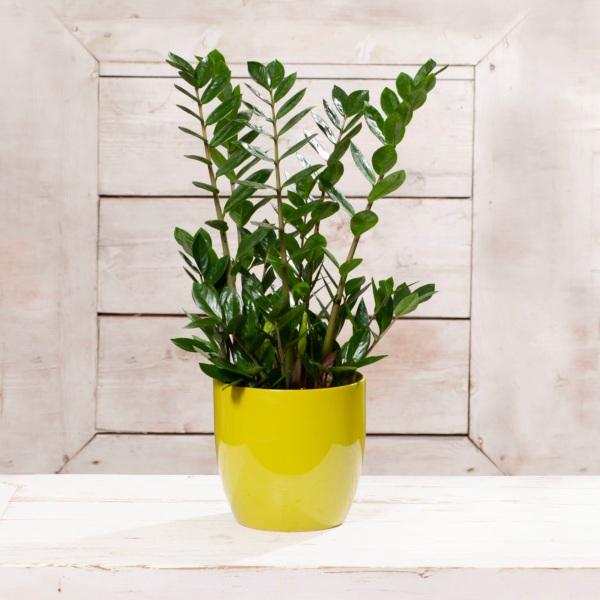 biljke za ured